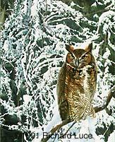"""Face of Wisdom"" - Richard Luce"